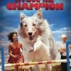my-dog-the-champion