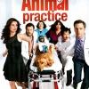 animal-practice
