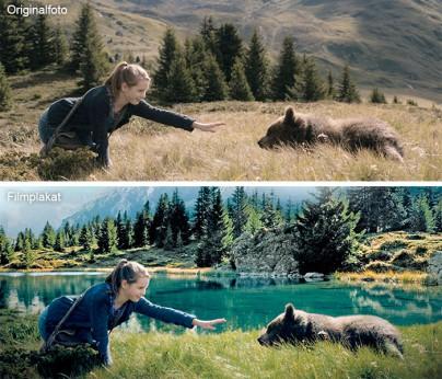 Vergleich der Bilder